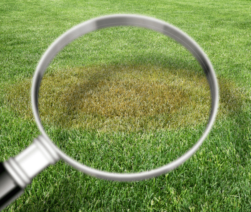Figure out what those brown spots in your lawn are