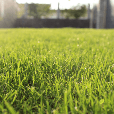 Water less and make your lawn stronger and more resilient with these summer lawn care tips.