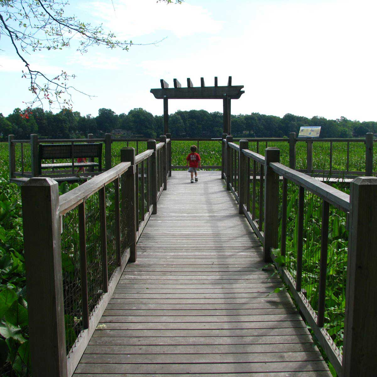 There is a lovely boardwalk to enjoy at Boundary Creek Natural Resource Area near Moorestown, NJ.