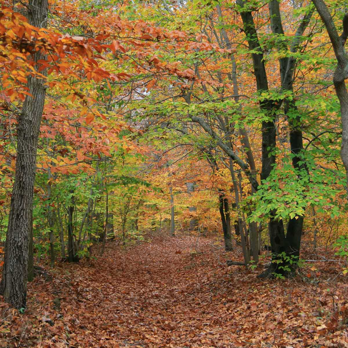 There is excellent hiking at Rancocas State Park near Mount Laurel, NJ.