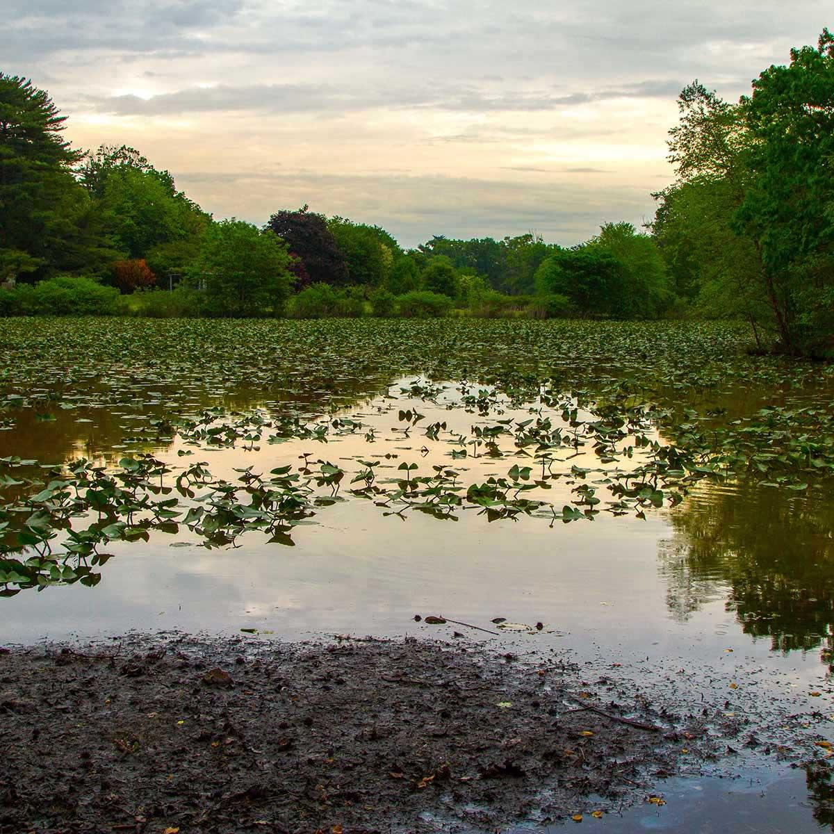 Enjoy the water at Strawbridge Lake Park near Mount Laurel, NJ.