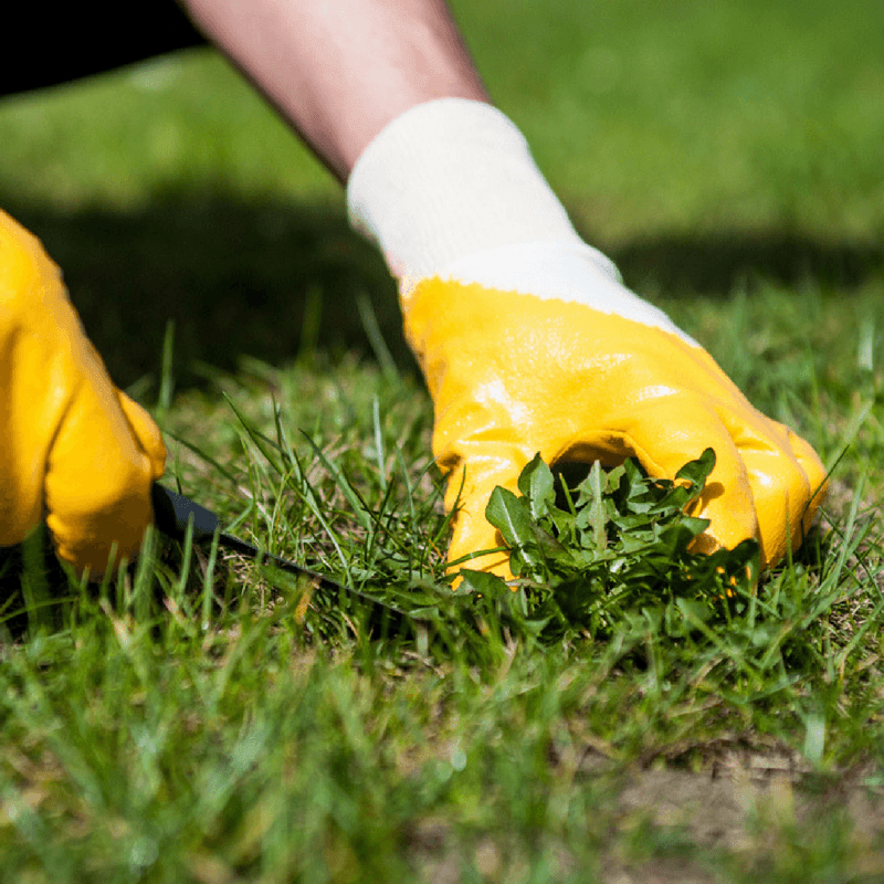 how to kill crabgrass in lawn