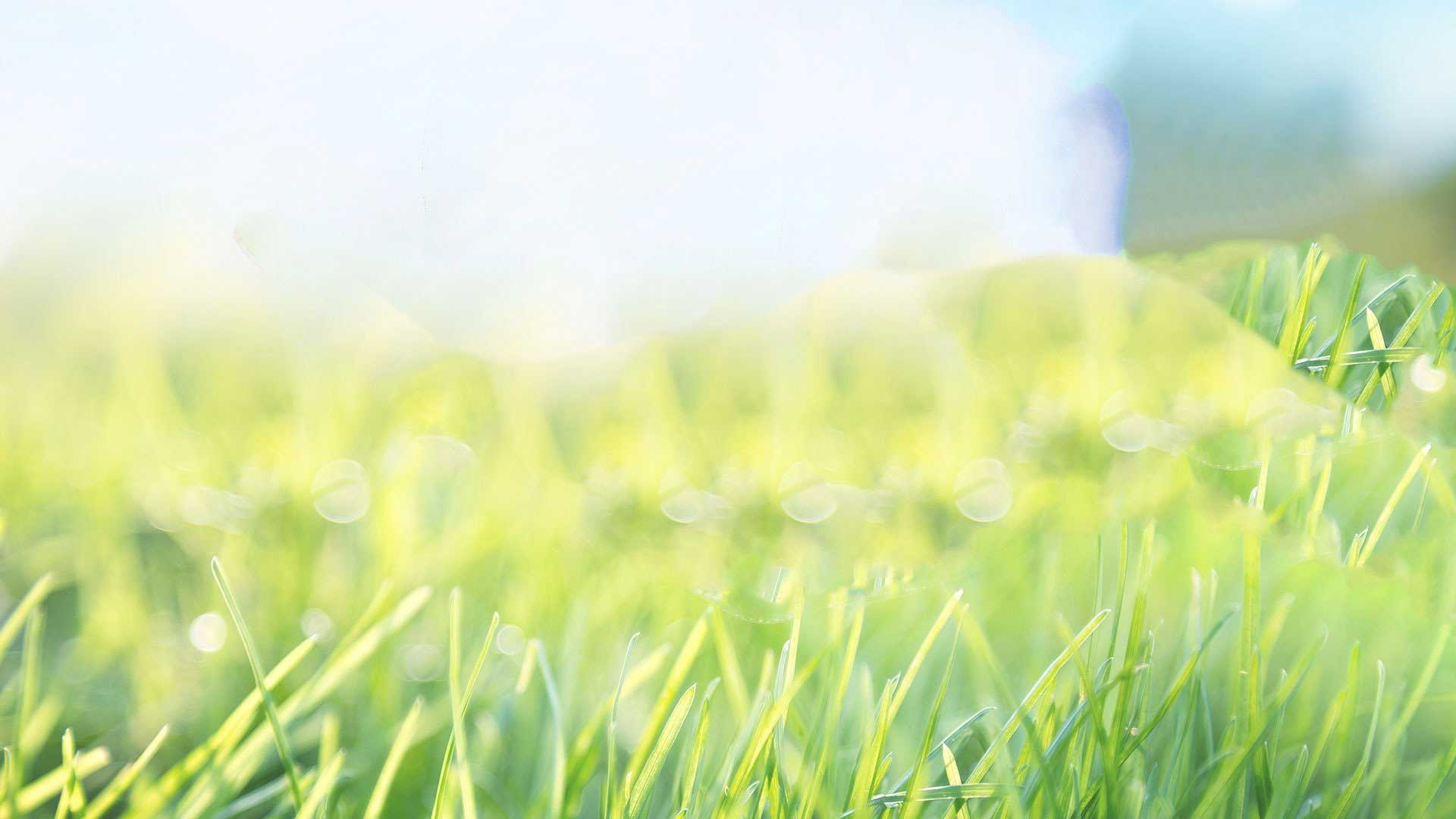 Elements Lawn Care brings life back into your lawn!