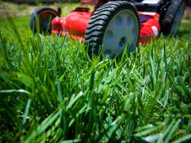 lawn-care-programs-icon