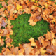 Fall lawn care, fall leaves in the shape of a heart