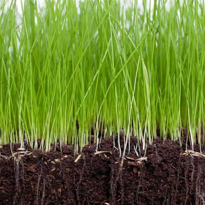 why should I aerate, soil
